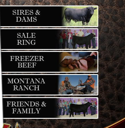 Mindemann Farms Angus Cattle and Freezer Beef, Sullivan, Wisconsin